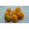 四川安岳特产 佛乐橙 甜橙